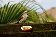 Villaに遊びに来る鳥