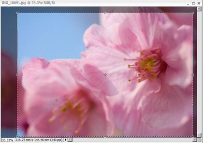 Photoshop Elements 5 (Win) ブログで使いそうな処理#5 基本処理手順まとめ