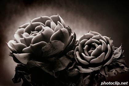 Strange Plants #1