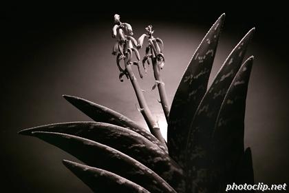 Strange Plants #2