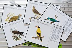 パマリカン島にいる鳥のカード