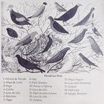 パマリカン島に生息する19種の鳥
