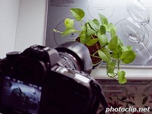偏光(PL)フィルターを使って植物を撮ってみたの巻