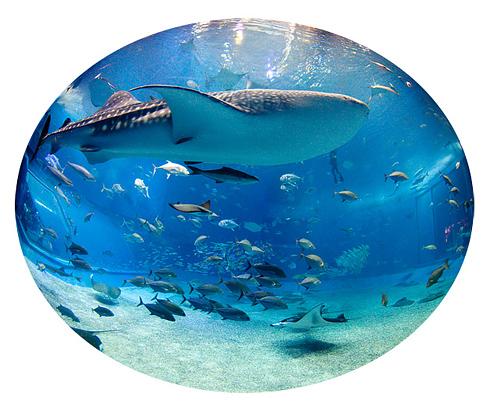 ブセナテラスへ行く前に沖縄美ら海水族館へ