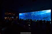 沖縄美ら海水族館 「黒潮の海」のパノラマ