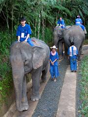象が行きかうテント下の道