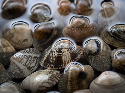 アサリの殻の模様ってきれいだなぁ
