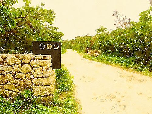 「星のや 竹富島」に向かう道、不整地走って脚力強化